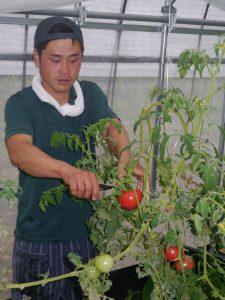 tomato201801