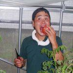 旬の野菜を食べるメリット
