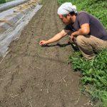 玉ねぎの苗を育てています