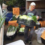 土日限定の無農薬野菜セット販売