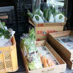 現在の収穫野菜