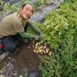 続・ジャガイモ収穫